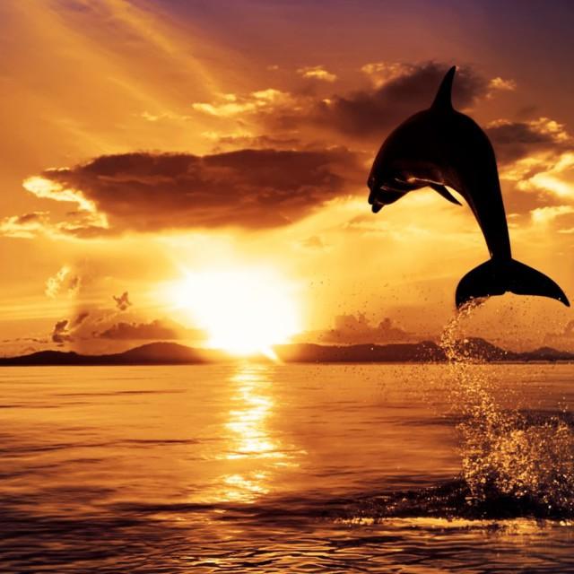 golfinhos-por-do-sol