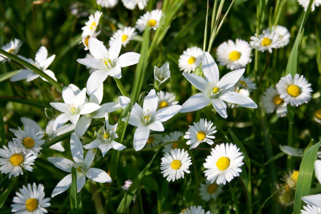 E 39 tempo di rinascere the bach flowers for Immagini farfalle per desktop